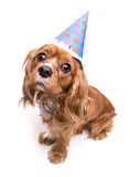 Happy Birthday Puppy Royalty Free Stock Image