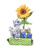 Happy bithday to someone special. Celebrate someone special with a sunflower and lovely wrapped gifts Stock Image