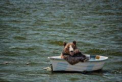 Free Happy Black Bear In Small Boat Royalty Free Stock Photos - 5618128