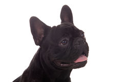 Happy black dog Stock Images