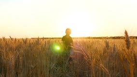 A happy blond boy runs among the ears of wheat. A child runs across a wheat field against a golden sunset. stock video