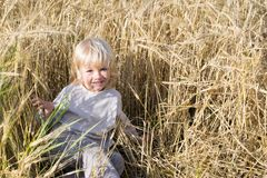 Happy blond child has fun in the rye field. Ripe ears of autumn harvest ready to crop royalty free stock photo