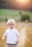 Happy blond kid boy enjoying sunset in wheat field. Stock Photos