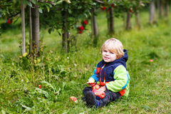Happy blond toddler with red apples Royalty Free Stock Photos
