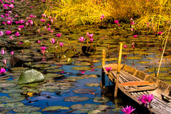 Happy Blossom lotus field or garden with old wooded boat Stock Photos