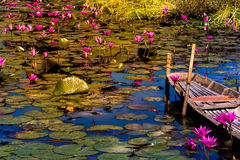 Happy Blossom lotus garden or field. Blossom lotus garden or field with old wooded boat Royalty Free Stock Photography