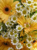 Happy bouquet. Photograph of a bouquet with yellow gerbera daisies and little chamomile flowers Stock Photo