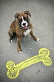 Happy boxer. Colourful chalk picture of dog bone on street and happy boxer stock photos