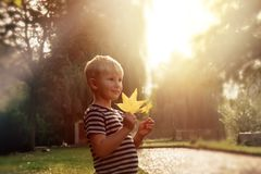 Happy boy in autumn park Stock Image