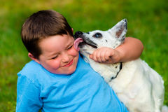 Happy boy being licked by his pet royalty free stock photography