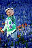Happy Boy in Bluebonnets Stock Images