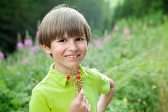 A  happy boy with a bunch of wild strawberry Stock Images
