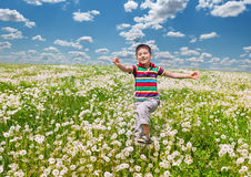Happy boy with dandelions Stock Images