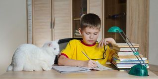 Happy boy doing homework with cat and books on table. Education concept. Stock Photos