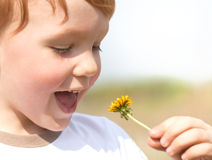 Happy boy enjoy with yellow dandelion Stock Photos