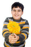 Happy boy with gerbera daisy Stock Photography
