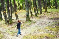 Happy boy hiking in forest, back view Stock Photos