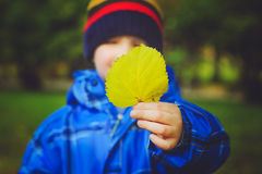 Happy boy holding colorful leaves in autumn Royalty Free Stock Image