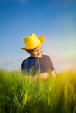 Happy boy  in the middle of wheat fields Royalty Free Stock Photography