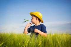 Happy boy  in the middle of wheat fields Stock Photography