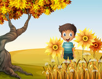 A happy boy near the sunflowers Royalty Free Stock Images