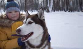 Happy boy playing with dog or husky outdoors in winter day. Focus on dog Stock Photo
