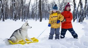 Happy boy playing with sled and dog husky outdoors in winter day.  royalty free stock images