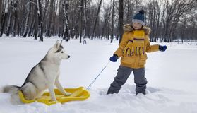 Happy boy playing with sled and dog husky outdoors in winter day.  stock photography