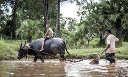 Happy boy riding water buffalo