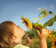 Happy boy with sunflower Stock Images