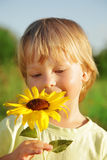 Happy boy with sunflower Royalty Free Stock Photo