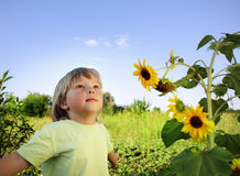 Happy boy with sunflower Stock Photos