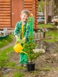 Happy boy watering a sapling tree stock photo