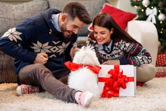 Boyfriend giving present to girlfriend dog as Christmas present Royalty Free Stock Image