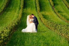 Happy bride and groom on green plant Stock Photos