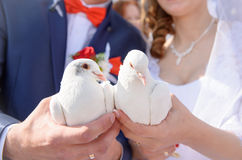 Happy bride and groom holding white doves in hands Royalty Free Stock Photos