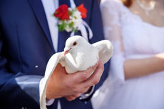 Happy bride and groom holding white doves in hands Stock Images