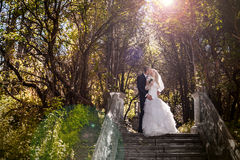 Happy bride and groom on ladder at wedding walk. Sweet kiss Stock Photo