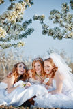 Happy brides Royalty Free Stock Photography