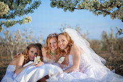 Happy brides Stock Image
