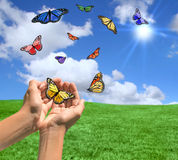 Happy Bright Landscape WIth Butterflies Stock Photos