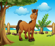 Happy brown horse inside a fence. Illustration of a happy brown horse inside a fence Stock Photography