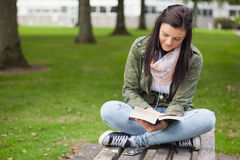 Happy brunette student sitting on bench reading Royalty Free Stock Images