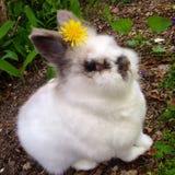 Happy bunny stock photos