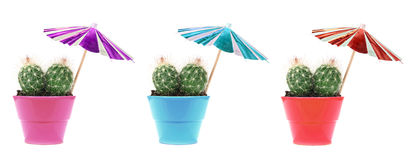 Happy cactuses on vacation ;) Royalty Free Stock Image