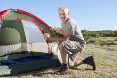 Happy camper setting up his tent Royalty Free Stock Images
