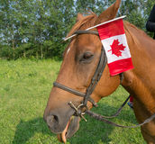 Happy Canada Day Royalty Free Stock Photography