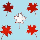 HAPPY CANADA DAY- Realistic red maple leafs. Isolated on a blue background.Celebration quotation for card, postcard, event icon, logo, badge. Concept of HAPPY Royalty Free Stock Images