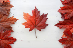 Happy Canada Day red silk leaves in shape of Canadian Flag. Happy Canada Day red silk leaves in shape of Canadian Flag on white shabby chic wood table Royalty Free Stock Images