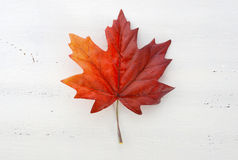 Happy Canada Day red silk maple leaf. On white wood shabby chic table stock image
